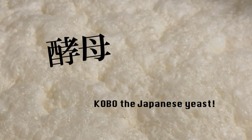 KOBO the Japanese yeast! Japanese Sake and brewing process